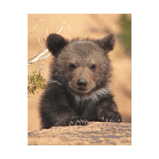 Toile Ours gris CUB