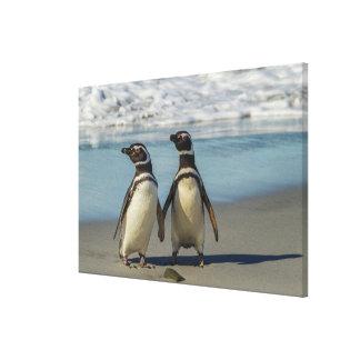 Toile Paires de pingouins sur la plage