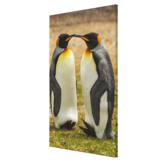 Toile Paires du Roi pingouins, Malouines