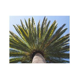 Toile Palmier de la Californie