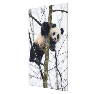Toile Panda de bébé dans l'arbre