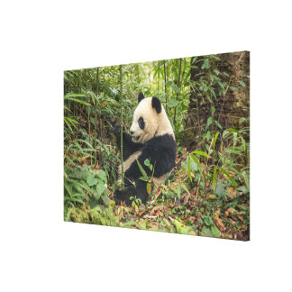 Toile Panda mangeant le bambou