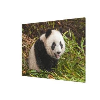 Toile Panda parmi le bambou