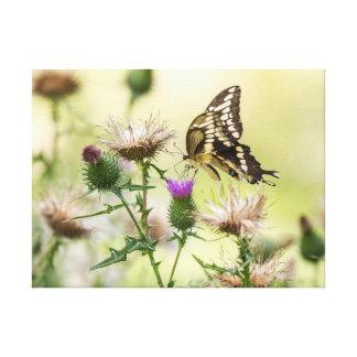 Toile Papillon géant de machaon