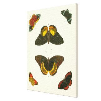 Toile Papillons lumineux par Pieter Cramer