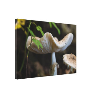 Toile Parapluie de champignon