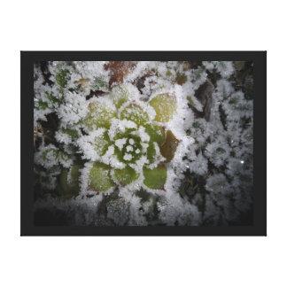 Toile paysage nature hiver givre gel glace cactée plante