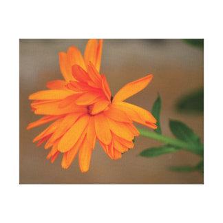Toile Pétales oranges de fleur de belle photo en gros