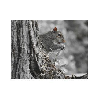 Toile Petit écureuil gris