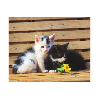 Toile Photo mignonne de chat de deux chatons