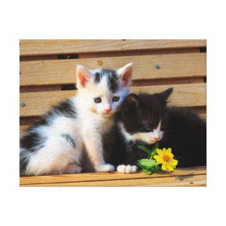 Toile Photo mignonne de chat de fleurs de chatons