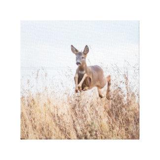 Toile photographie de cerfs communs