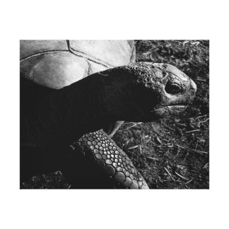 Toile Photographie de tortue en noir et blanc