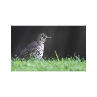 Toile Photographie d'oiseau
