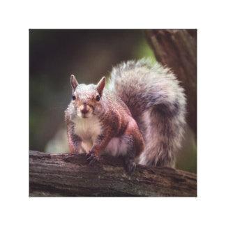 Toile Photographie locale de faune d'écureuil assez gris