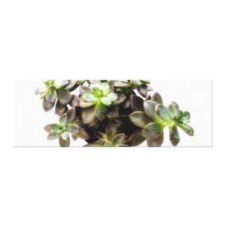 Toile Photographie succulente II