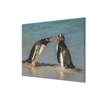 Toile Pingouins discutant, Îles Falkland