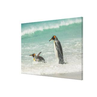 Toile Pingouins nageant sur la plage
