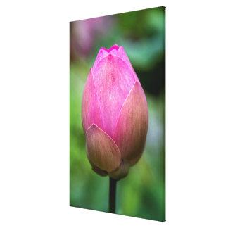 Toile Plan rapproché de bourgeon floral de lotus, Bali