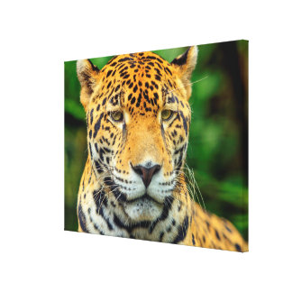 Toile Plan rapproché d'un visage de jaguar, Belize