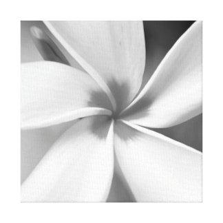 Toile Plumeria - macro portrait noir et blanc