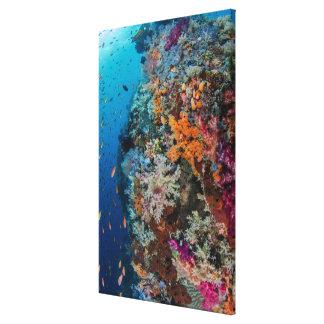 Toile Poissons et récif coralien pittoresques