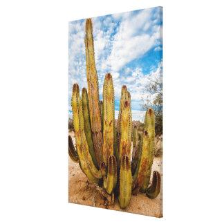 Toile Portrait de cactus de vieil homme, Mexique