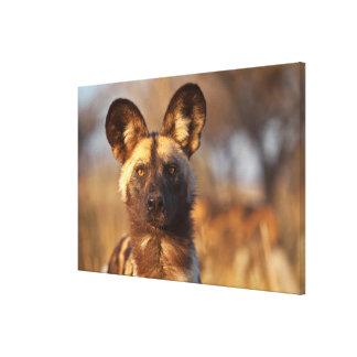 Toile Portrait de chien sauvage
