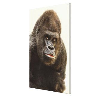 Toile Portrait de gorille de Silverback