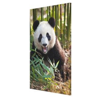 Toile Portrait de sourire de panda