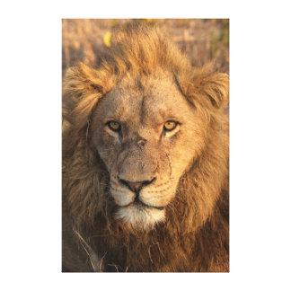 Toile Portrait d'un lion masculin