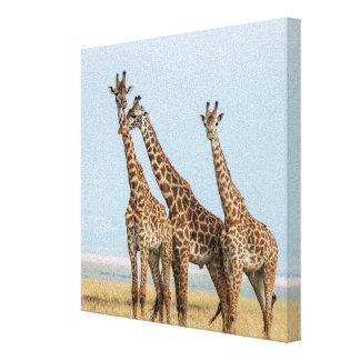 Toile Pose de trois girafes