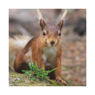 Toile poster de animal d'écureuil rouge