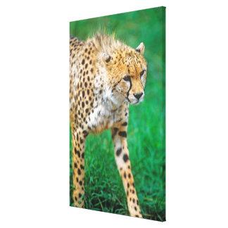 Toile Proie de égrappage de guépard
