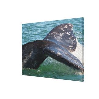 Toile Queue de baleine grise