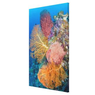 Toile Récif coralien pittoresque