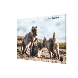 Toile Ressort - Fox arctique