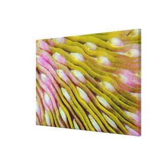 Toile Résumé jaune de corail dur