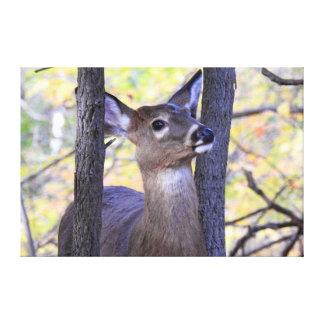 Toile Réunion de cerfs communs dans les bois