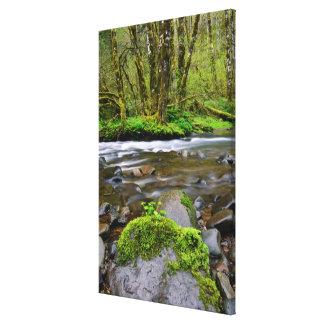 Toile Rivière dans la forêt verte, Orégon