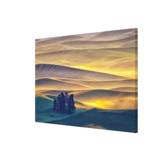 Toile Rolling Hills de blé au lever de soleil | WA