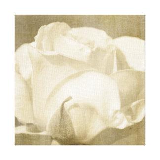 Toile Rose blanc