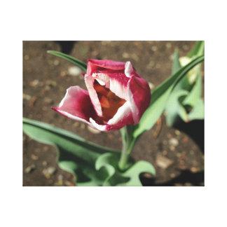 Toile rose de fleur toiles