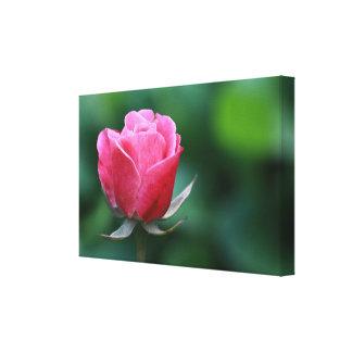 Toile Rose rose/rouge magnifique a étiré la copie de