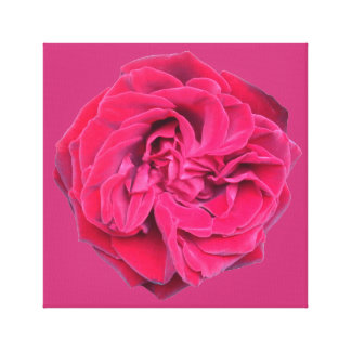 Toile Rose rouge
