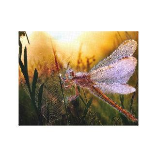 Toile Rosée de matin sur la libellule