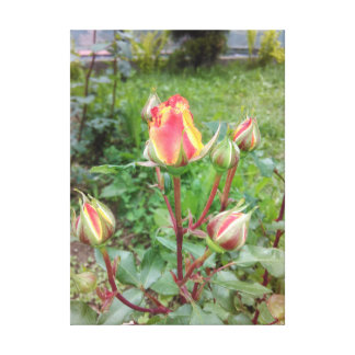 Toile Roses de thé oranges