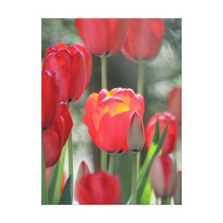 """Toile rouge 24"""" de tulipe x 32"""""""