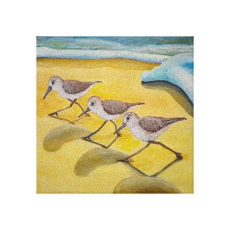 Toile Sanderlings