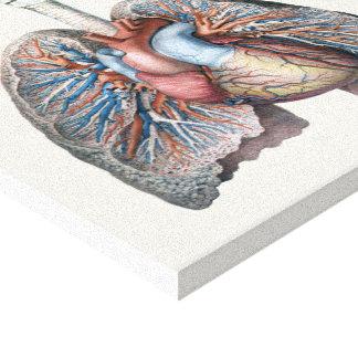 Toile Sang humain vintage d'organes de coeur de poumons